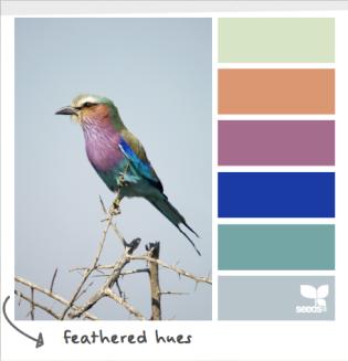 FeatheredHues_10